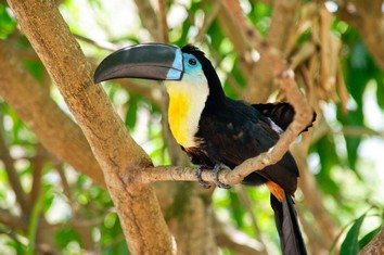 Touristic attractions of Belize
