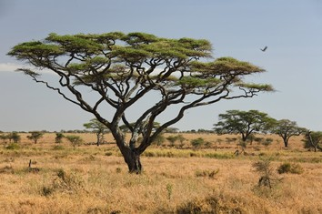 Touristic attractions of Africa